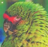 Papuga Latex #2 (2)